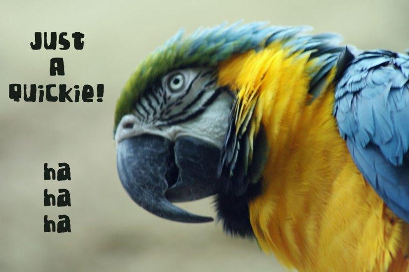 parrotquickie