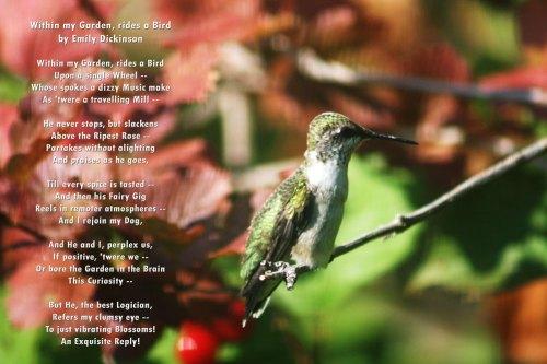 hummingbirdwpoem