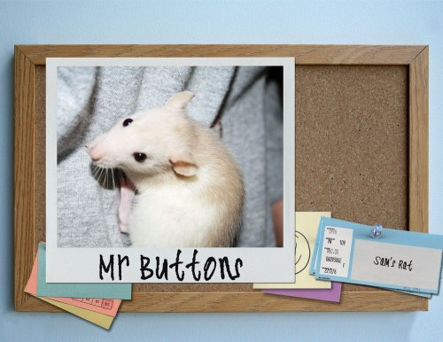 Mr-Buttons