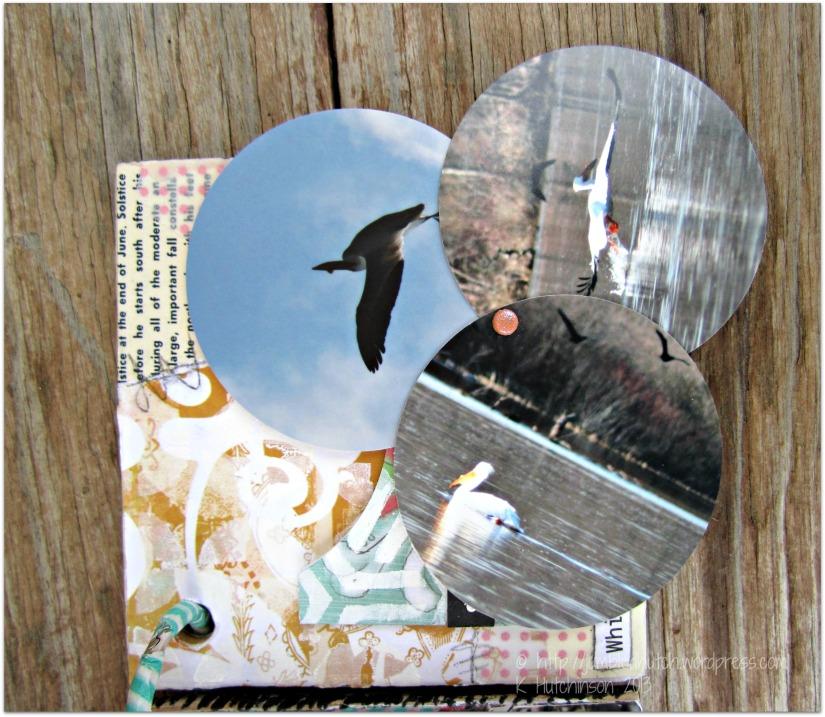 GJS-birdbookcloseipelican